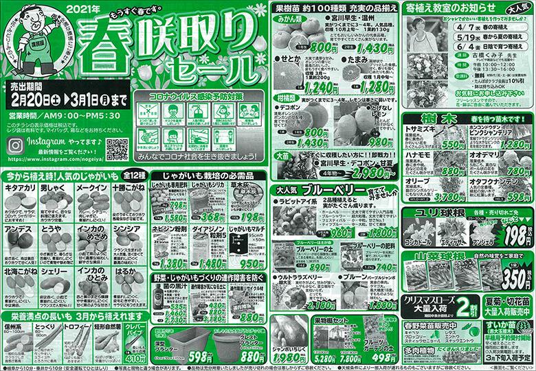 2/20(土)~3/1(月)まで春咲取りセール開催!